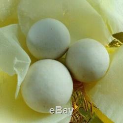4X Thai Amulet White Pearl Leklai Lp Somporn Buddha Lucky Protect success