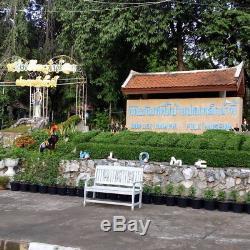 Buddha Statues Phra Nak Prok 7 Naga Heads Saturday Lek Namphi Origin Thai Amulet